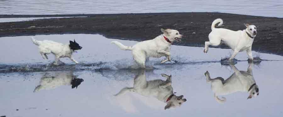 Dog Manager Ihod© 4