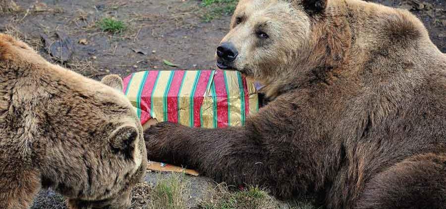 MDG 2444 Natale con gli orsi 2