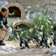 MDG 8775 alb pasto pinguini