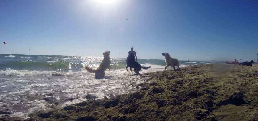 Baubeach® la spiaggia per cani liberi e felici.